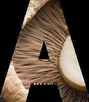 Health benefits of Australian mushrooms